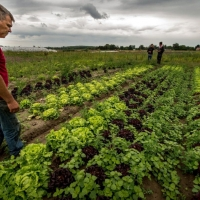 Organic farming: why the State is withdrawing from aid for maintenance