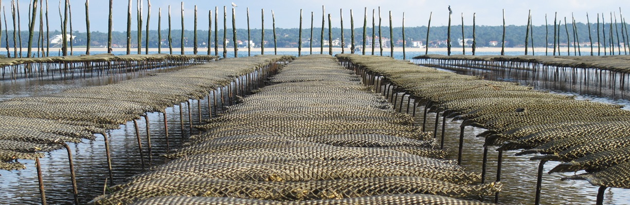 This Breton, installed on the Pénerf river in Morbihan, has other reasons for stress. Strikes could well disrupt the flow of oysters ready to spill into store shelves.